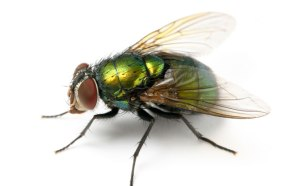 Unless one of those flies is Jeff Goldblum